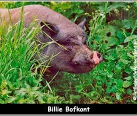 Familie Bofkont: Het Beloofde Varkensland | Sanctuary