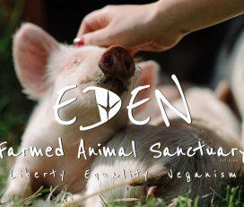 Eden Farmed Animal Sanctuary