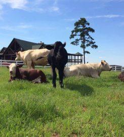 Full Circle Farm Sanctuary