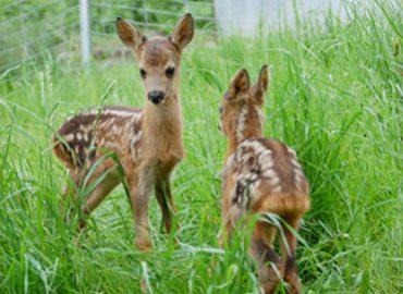 Tierparadies Schabenreith | Sanctuary