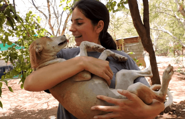 Animal Aid Unlimited | Sanctuary