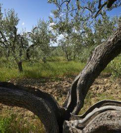 Biotique Agrivilla i pini