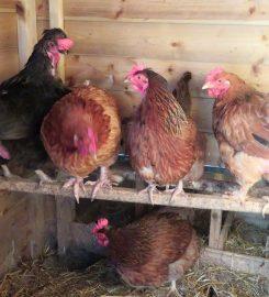 Hugletts Wood Farm Sanctuary