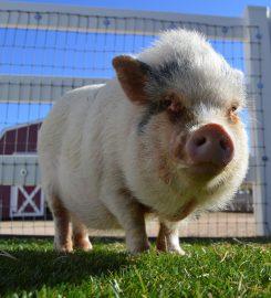 Saving Grace Animal Sanctuary