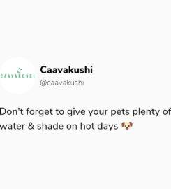 Caavakushi
